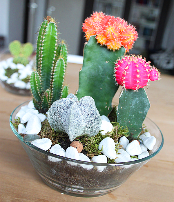 Small Cactus Garden Is A Genius Way Of Organizing Your