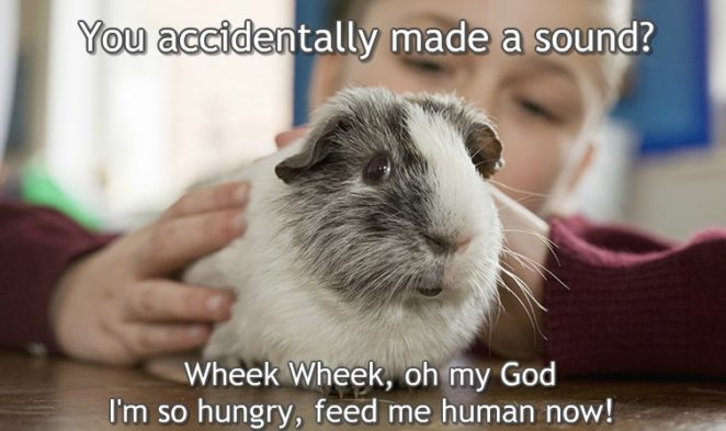 You accidentally made a sound? Oh my God i'm so.... Guinea ...