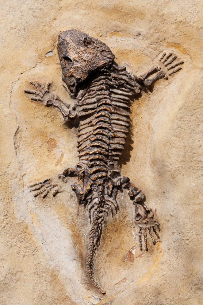 Come fa datazione relativa consentire paleontologi per stimare letà dei fossili Quizlet