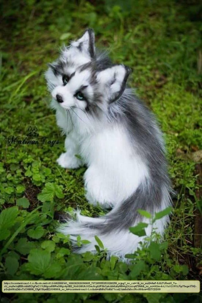 Have You Ever Heard Of The Canadian Marble Fox Virily