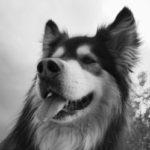 Profile picture of Jett