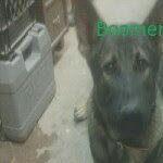 Profile picture of Guarddog